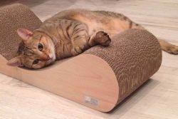 Cats Toys Cat Scratch Board Pad Golfpapier krassen Posten PET Producten Kitten Grindnagels gereedschap