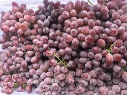 Verse Organische Rode Globale Druiven