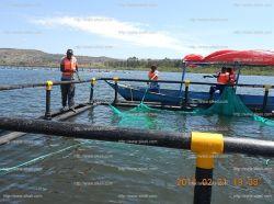 HDPE Tilapia Floating 5mx5m 우간다 Culture Farm