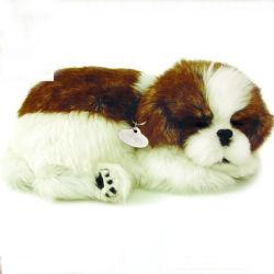 スリープの状態である呼吸のいびきをかく動物犬はPetzzzを完成する