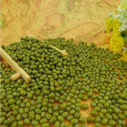 건조한 새로운 작물 수출 유기 경작 농업 중국 도매 녹색 녹두