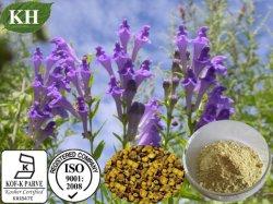 Uittreksel het Van uitstekende kwaliteit Baicalin van Scutellaria Baicalensis van de vervaardiging