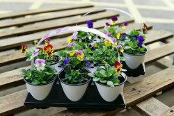 Le thermoformage Pot de fleur jardin en plastique semoir pépinière d'impression de l'ensemencement pot
