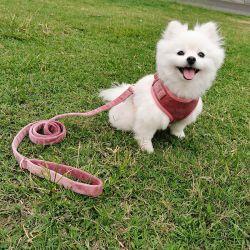 Allerlei Design Full Sets Dog/Pet Accessoires/Metal Buckle/Factory Price Metalen gesp