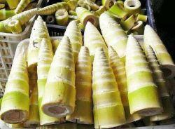 2020 Nouveau sortir des aliments en conserve en conserve les moitiés de pousses de bambou entiers//coupe/bande avec Competitve Prix