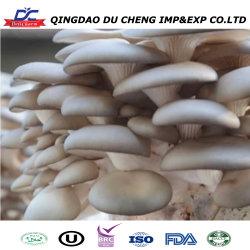 Cultivo orgânico fresco congelado cogumelo Shiitake
