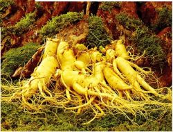 Ginseng C.A. Mey 10.0%-80.0% Ginsenoside del Panax dell'estratto del Ginseng