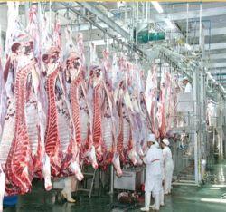 Stimolatore elettricamente alimentato del manzo di bassa tensione per la strumentazione di macello del bestiame