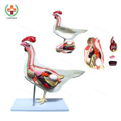 Sy-N033 Chien Chat cheval animaux vache Anatomie squelette modèle pour la science médicale de la formation