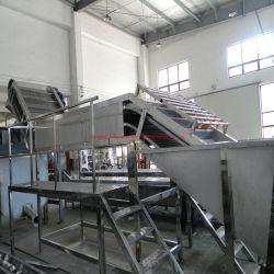 Tomatensaus Ketchup Paste Processing productielijn Plant