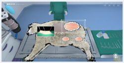 Animal Rumenotomy Simulación Virtual de la cirugía del Software del Sistema de Formación de Realidad Virtual Vr