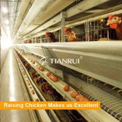 Gabbie di batteria automatiche del pollame delle galline ovaiole dell'azienda agricola di pollo di strato dell'uovo di buoni prezzi da vendere