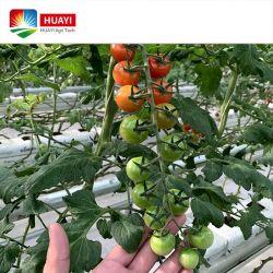 Aangepaste plastic folie Polycarbonaat Blad Agricultural Multi-Span Single Span kassen Turnkey Project met Hydroponics System for Vegetable
