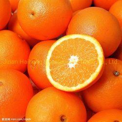 Hochwertige chinesische frische Shandong-Navel-Orange
