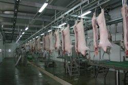 ブタの食肉処理場装置の分割は屠殺の加工ラインについては見た