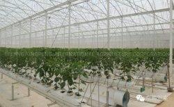 Los racores para tubo de bastidor de efecto invernadero vegetal y el tomate y pepino Pimiento/