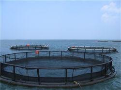 سمكة يزرع [سا وتر] [هدب] يعوم شبكة قفص