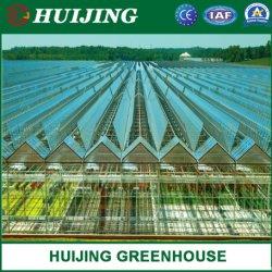 Túnel vegetal agrícola Multi-Span láminas de policarbonato plástico/PC/Hydroponic Venlo cristal/gases de efecto para la Agricultura La agricultura /Verduras/Flores/el tomate