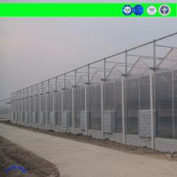 China de plástico económico, comercial/Película/policarbonato corrugado/Poly PC UV hojas cubiertas de gases de efecto, el MOC: Metal de acero, en la agricultura/Granja/Vegetagle/Tomate
