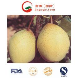 高品質のYaの中国のナシの新しいナシのアジア人のナシ
