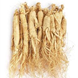 Suministro de gránulos de raíz de Ginseng