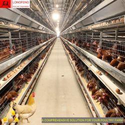 롱펑 치킨 팜 프로젝트 가금류 영농 장비 자동 닭고기 층 케이지