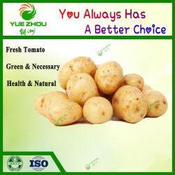 Zubehör-chinesische frische organische Kartoffel mit Qualität