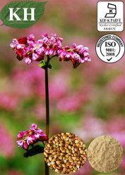 D Chiro-Inositol 10%, 96% GC extrato de semente de trigo sarraceno