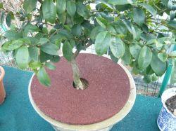 Suelos de caucho reciclado personalizado fábrica Mat adoquines del patio para jardín de árboles de caucho Mat con la norma EN1177 certificado