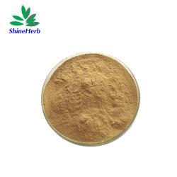 100 % Pure et Naturelle Échinacée P. E Echinacea Purpurea extrait de plante 1%-4% acide Chicoric