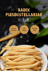 底Pseudostellariaeは健康食品のための繁文薬である