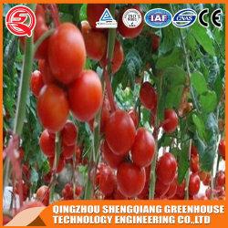 Película de plástico empresas para la Agricultura Vertical de efecto invernadero vegetal Anti-Season/Flower/fruto/Jardín cultivo