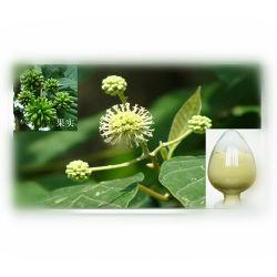 Camptotheca acuminata extraire/la camptothécine poudre/la camptothécine