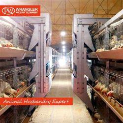 공급 현대 보일러 닭 감금소 장비 흰 살코기 닭 감금소