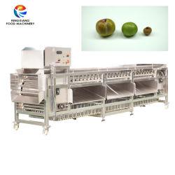 Fazenda Cebola Batata tomate maçã frutas vegetais Rolete de Tamanho de classificação do tipo de máquina de ordenação