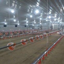 계류용 닭고기 육면용 자동 가금류 농장 장비