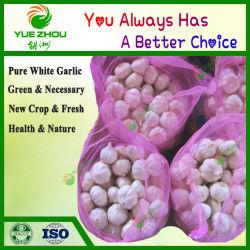 Большое количество свежего органического чеснок красный чеснок с дешевой цене