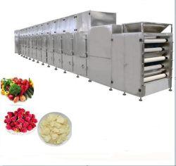 新設計の乾燥野菜加工ライン