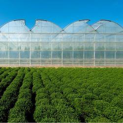 PC de la película de plástico PE Sistema de hidroponía invernaderos de vidrio para la Casa Verde Hoja de policarbonato
