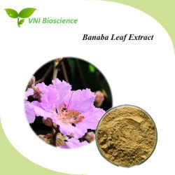 100% 천연 라거스트로혈증 Speciosa 코로세olic Acid Banaba Leaf 추출물