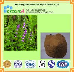 Scutellaire barbelé Lobeliae/herb/herb Extrait Extrait le Lobelia