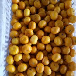 Amarelo Bebê Doces Mandarin com embalagem de papelão