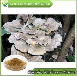 Puro y Natural Extracto de hongo Coriolus Extracto de hongo Coriolus