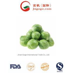 La calidad super plana fresco chino repollo verde repollo Napa