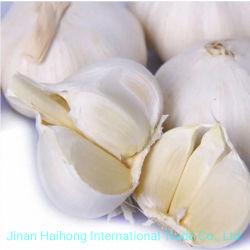 L'ail fraîche et blanche Produits exportés de Chine