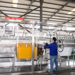 Qingdao Raniche máquina compacta de China de la línea de sacrificio el sacrificio de pollo