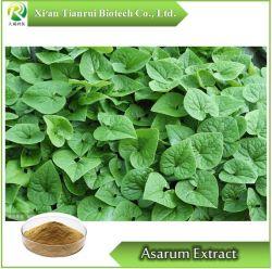 Asarum/radice del 10:1 cinese dell'estratto dello zenzero selvaggio, polvere