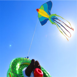 China Dom Toy Rainbow Pássaros Kids Sport Cartoon Kite