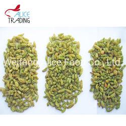 最もよい価格の緑の干しぶどうの自然で甘い乾燥されたブドウ