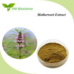 Сертификат ISO 100% натуральные Motherwort извлечения для лечения гинекологических заболеваний